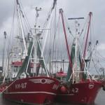 Fischereischiffe im Rømø Havn 1