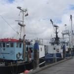 Fischereischiffe im Rømø Havn 2